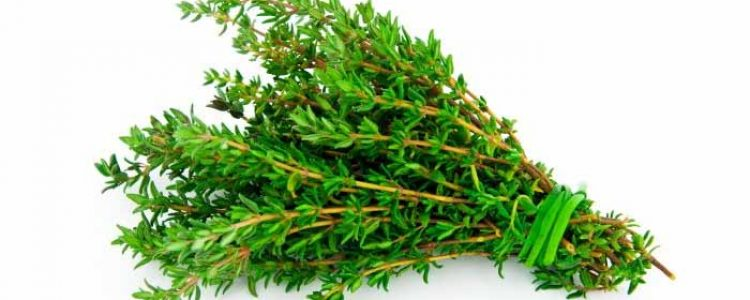 5 Reasons Thyme is Truly a Healing Herb